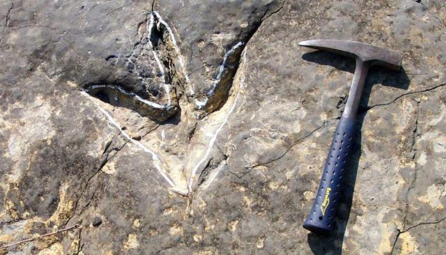 Resultado de imagen para paleoicnologia